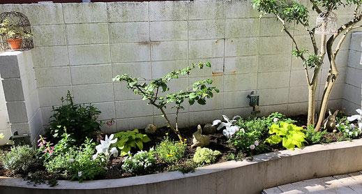 練馬桜台がーデニングショップかのはの土壌改良とお客様が選ばれた植物を植え込みました 練馬桜台ガーデニングショップ かのはの
