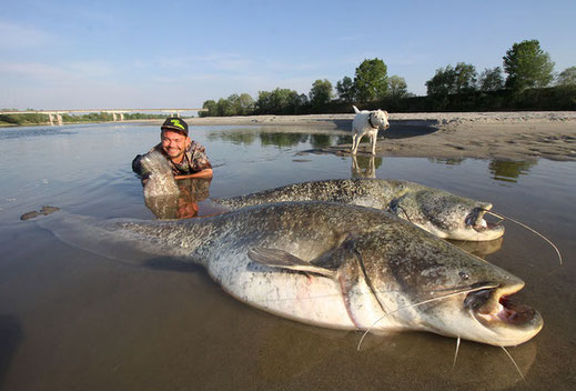 Wie immer half Benny fleissig mit und belohnte sich an einem sonnigen Nachmittag mit zweimal über 2 Meter aus dem grossen Fluss.