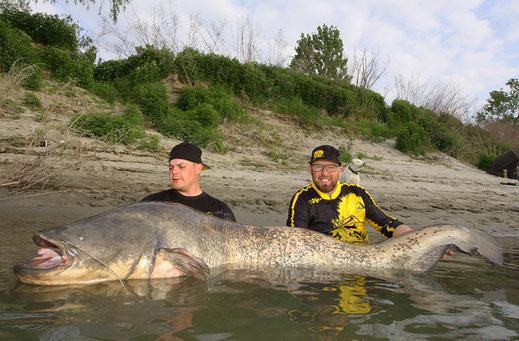 Die WILD CAT´z Rute mit ihrer parabolischen Aktion als Fanggerät ermüdet schonend die größten Welse und nicht die Bandscheiben des Anglers.