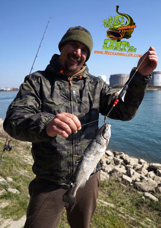 """Tote Köderfische nahezu """"lebendig"""" präsentieren mit dem Black Cat Dead Bait Puncher waren unter anderem der Schlüssel zum Erfolg"""