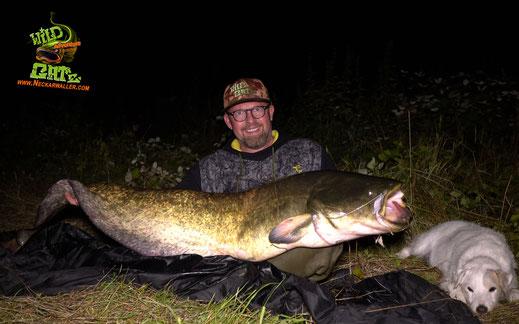 Welsangeln in Deutschland kaum wurde es dunkel biss auch hier an Spot 2 wieder der Wels, ein deutlich größerer Fisch als alles am Vorabend, lieferte einen spannenden Fight im Schein der Kopflampe.