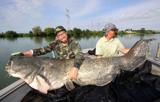 Peter Merkel und Patrick Haas mit einem über 100 Kilo schweren Vertkal Wels.