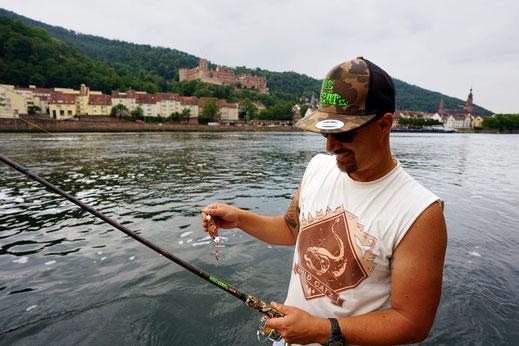 Welsangler wirft Blinker weit über das Ziel hinaus - Mehrere Einschläge eines großen Blinker, ein sogenannter Spinköder zum aktiven angeln auf Wels, wurden am Samstagnachmittag im Garten des Heidelberger Schlosses verzeichnets