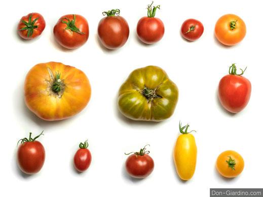 Alte Tomaten Sorten erhalten