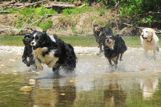 Hundefotografie Hundfotograf Angebote Gruppen Gruppenangebot Aktion Hund Hunde Fotoshooting  Preise  Preisliste Konditionen