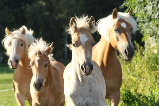 Pferdefotografie Angebote Aktion Gruppenangebot 35 Euro günstig Aktionspreis