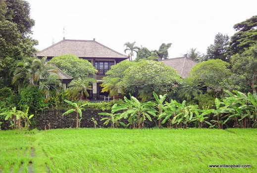 Pipitan, Canggu, villa for sale by owner directly
