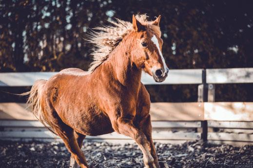 Pferdisch- gut, Pferdeblog, Pferde Blog, Pferd, Pony, Reitpony, Tine und Daggi, Federschmuck, Pferdeartikel