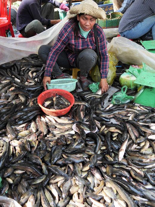 Es gibt dermaßen viel Fisch... Battambang, Kambodscha (Foto Jörg Schwarz)