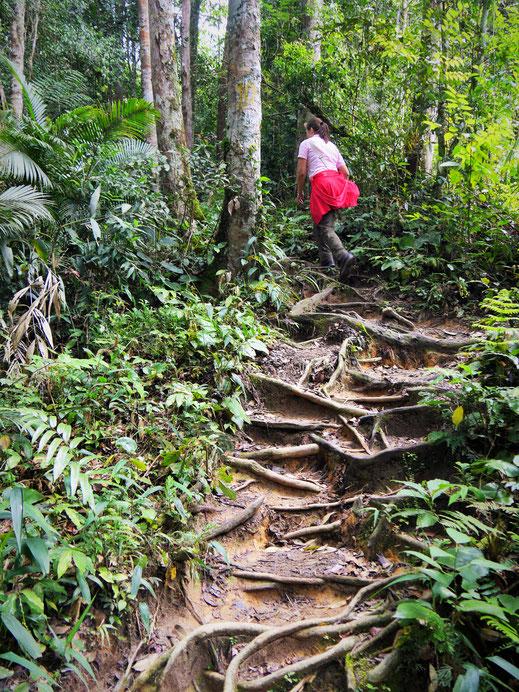 Es geht jetzt ganz schön steil aufwärts... Cameron Highlands, Malaysia (Foto Jörg Schwarz)