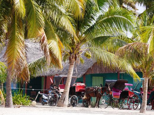 Alte Pferdekutschen an der Playa los Cocos, Kuba (Foto Jörg Schwarz)
