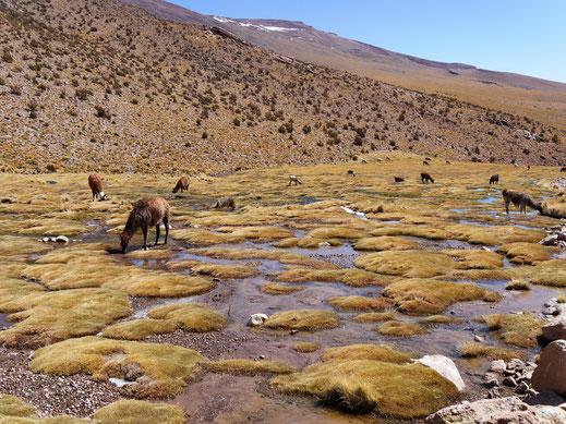 Über 2.000 m schlängelt sich das Flusstal so oder so ähnlich den Berg hinunter - einfach idyllisch, Bolivien (Foto Jörg Schwarz)
