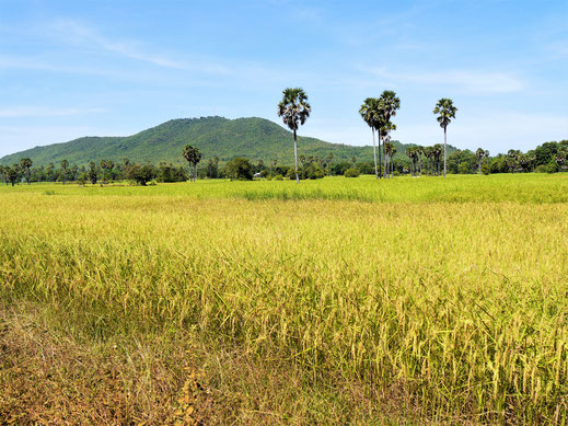 Die Umgebung von Kompong Chhnang ist abermals wundervoll... Kompong Chhnang, Kambodscha (Foto Jörg Schwarz)