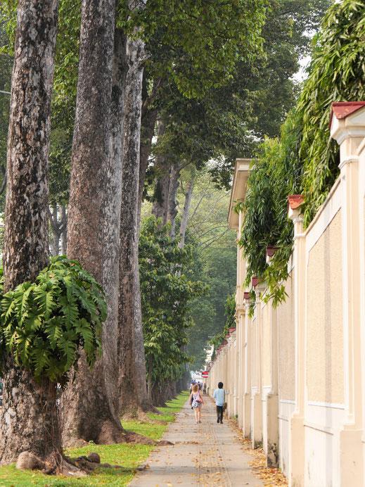 Wundervolle Bäume am Rande des Unabhängigkeitspalasts... Ho-Chi-Minh-Stadt, Vietnam (Foto Jörg Schwarz)