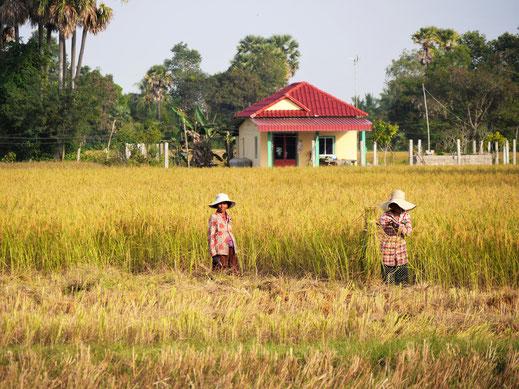 Die Menschen sind freundlich und neugierig... Bei Takeo, Kambodscha (Foto Jörg Schwarz)