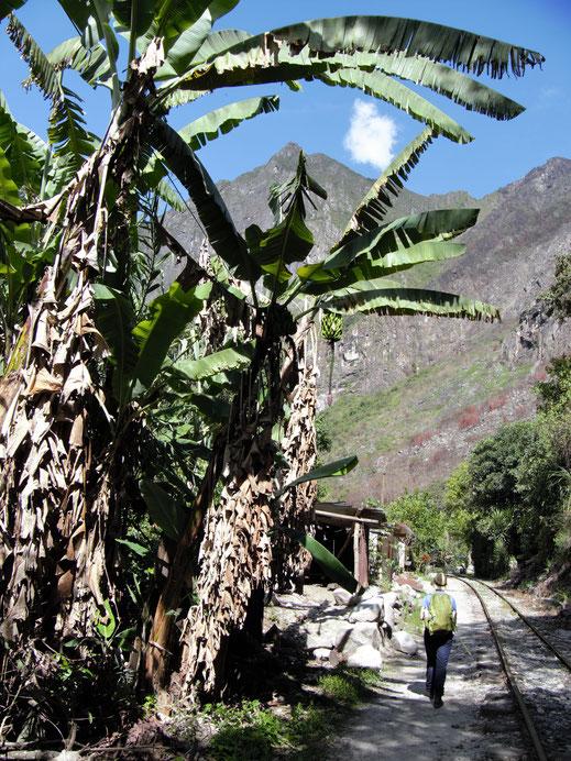 Großartige Tropenlandschaft... Machu Picchu, Peru (Foto Jörg Schwarz)