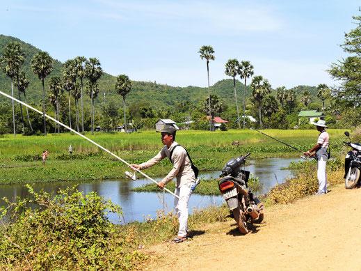 Am Rande der Reisfelder haben sich Tümpel gebildet, in denen große Welse leben... Kompong Chhnang, Kambodscha (Foto Jörg Schwarz)