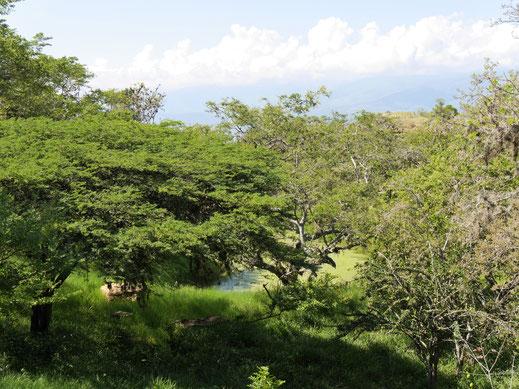 Die Landschaft ist fantastisch und zeigt die typischen Pflanzen der Region, Barichara, Kolumbien (Foto Jörg Schwarz)