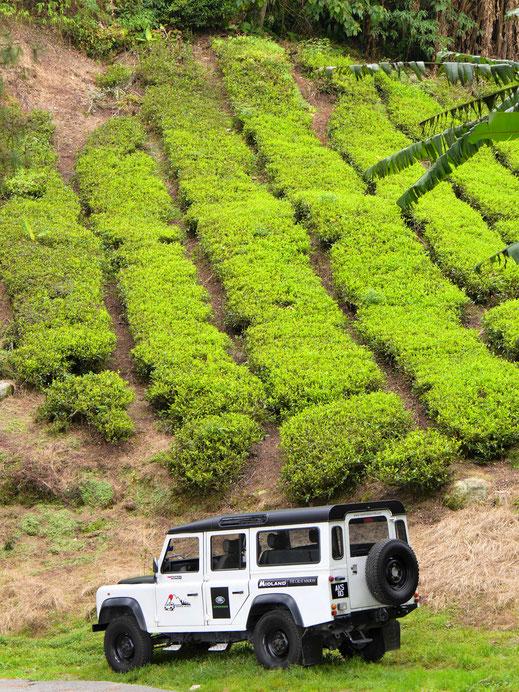 Unser Fahrzeug vor Teekulisse, Cameron Highlands, Malaysia (Foto Jörg Schwarz)