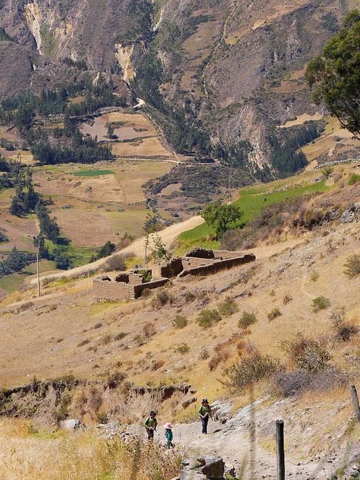 Immer wieder begegnet man den Bewohnern der Berge, Huaraz, Peru (Foto Jörg Schwarz)