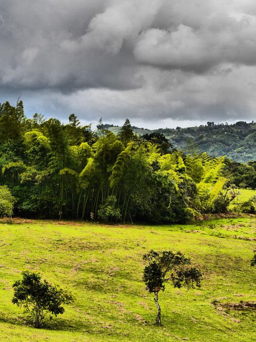Ein Bambuswäldchen im Dramatic-Modus, San Augustin, Kolumbien (Foto Jörg Schwarz)