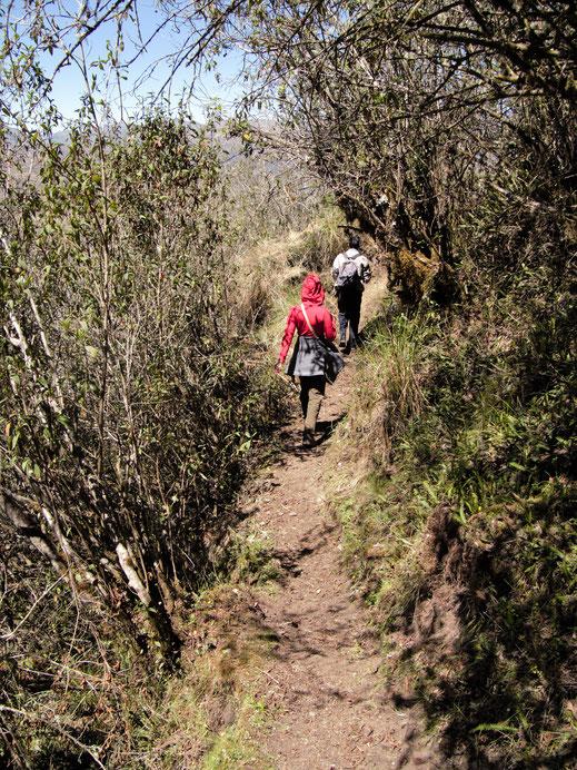 Es geht immer wieder durch abwechslungsreiche Vegetation, Sorata, Bolivien (Foto Jörg Schwarz)