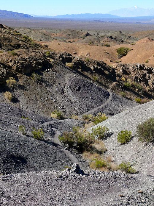Die halbwüstenhafte Landschaft scheint nur auf den ersten Blick langweilig zu sein... Barreal, Argentinien (Foto Jörg Schwarz)