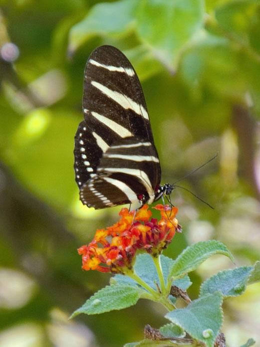 Vogel- und Insektenliebhaber werden auf ihre Kosten kommen, Barichara, Kolumbien (Foto Jörg Schwarz)