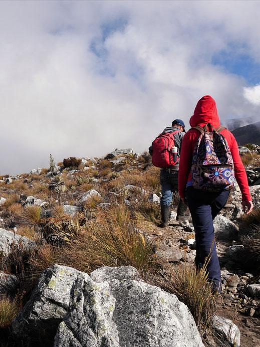 In der Höhe von 3.400 m - 4.500 m ist der Sauerstoff knapp... El Cocuy Nationalpark, Kolumbien (Foto Jörg Schwarz)