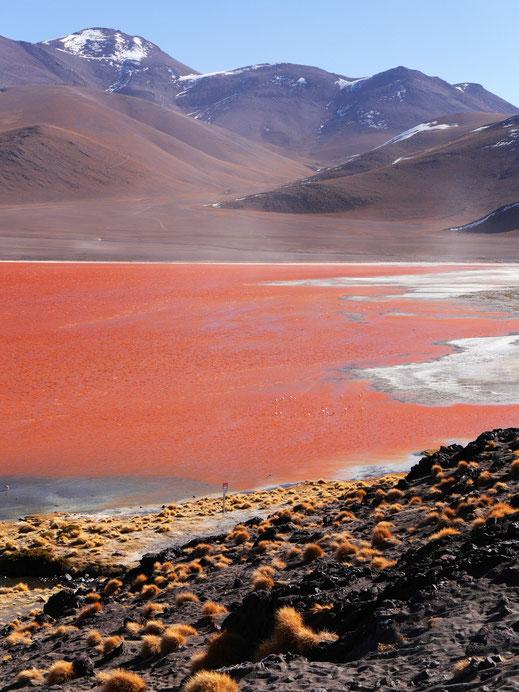 Sicher ein Highlight: Die Laguna Colorada, Reserva Nacional de Fauna Andina Eduardo Avaroa, Bolivien (Foto Jörg Schwarz)