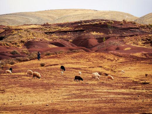 Uns begegnen immer wieder Schäfer mit ihren Herden im Krater, Crater Maragua, Bolivien (Foto Jörg Schwarz)
