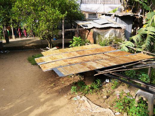 Geschnittene Bananen liegen zum Trocknen aus - später erhält man sie als ganze Platte... Bei Battambang, Kambodscha (Foto Jörg Schwarz)