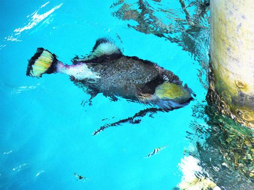 Tauchen, Schnorcheln, Unterwassersport... Die Perhentians bieten hier eine Menge... Pulau Perhentian Besar, Malaysia (Foto Jörg Schwarz)