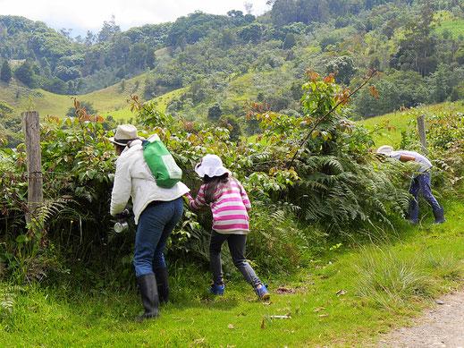 Obwohl die Brombeeren noch nicht ganz reif sind... Gachantivá, Kolumbien (Foto Jörg Schwarz)