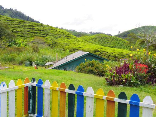 Das Dorf der indisch-stämmigen Teearbeiter liegt sehr idyllisch - wären da nur nicht all die Tagesgäste...  Cameron Highlands, Malaysia (Foto Jörg Schwarz)