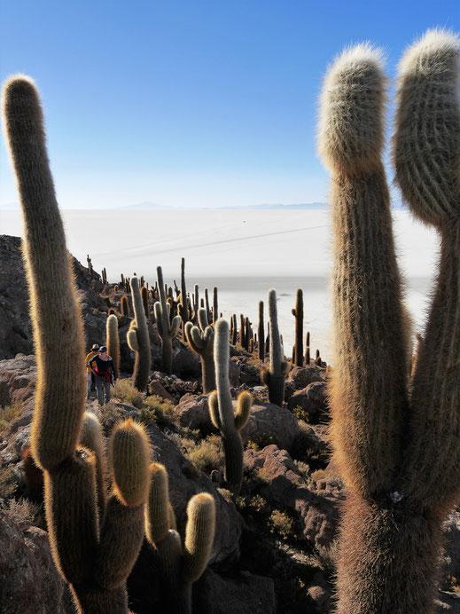 Über und über mit uralten, riesigen Kakteen: Isla Pescado, Salar de Uyuni, Bolivien (Foto Jörg Schwarz)