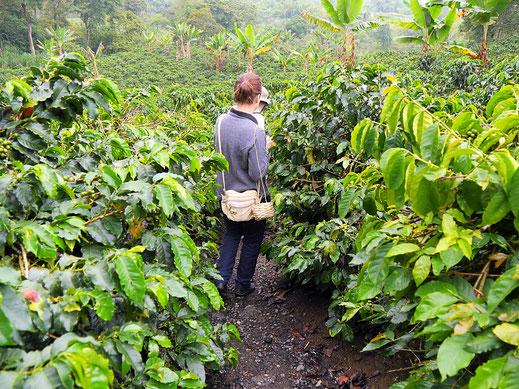 Spurenwechsler Reiseblog Reiseberichte Reisereportagen Fotografie outdoor Kolumbien Natur Kultur Traveller Welt Urlaub Filandia Armenia Kaffee