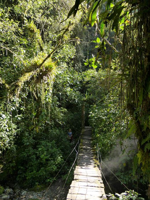 Was für eine Dschungelpracht, Valle de Cocora, Kolumbien (Foto Jörg Schwarz)
