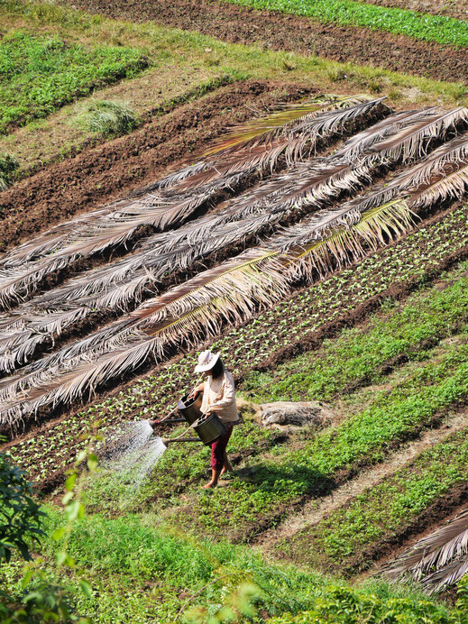 Die fleissigen Bauern der Umgebung... Bei Kampot, Kambodscha (Foto Jörg Schwarz)