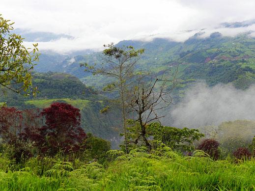 Üppig grün und feucht: Die Wanderrefugien rund um San Augustin, Kolumbien (Foto Jörg Schwarz)