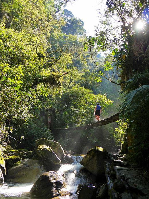Immer wieder sind Hängebrücken zu überqueren... Valle de Cocora, Kolumbien (Foto Jörg Schwarz)