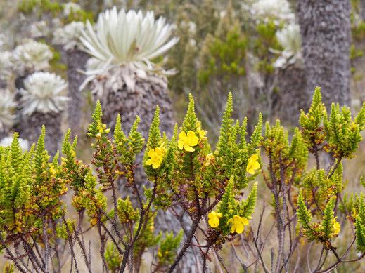 Die Vielfalt an Pflanzen ist überschaubar, dafür schön! Monguí, Kolumbien (Foto Jörg Schwarz)