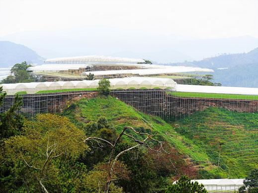 Bis in höchste Lagen hinein: Landwirtschaftliche Anbauflächen mit Sonnenschutz, Cameron Highlands, Malaysia (Foto Jörg Schwarz)