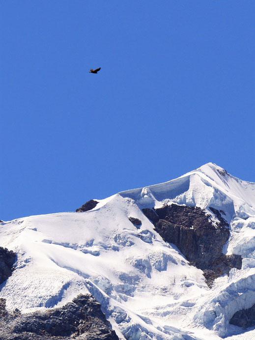 Greifvögel kreisen immer wieder über unseren Köpfen, Sorata, Bolivien (Foto Jörg Schwarz)