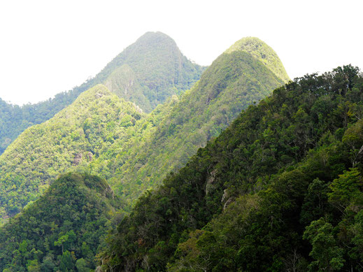 Die Gipfel des zweithöchsten Berges der insel Langkawi, Malaysia (Foto Jörg Schwarz)