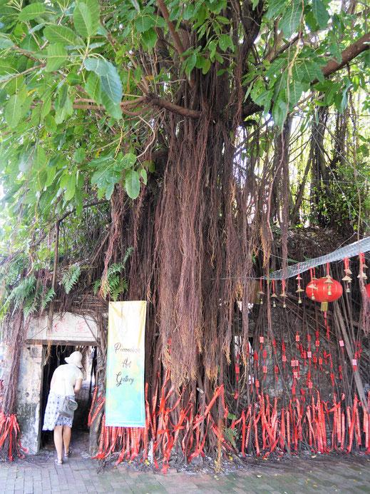 Die Ruine eines alten Storehouses, die hier von einem riesigen Baum und seinen Luftwurzeln überlagert wird, ist heute eine spontane Galerie, Terengganu, Malaysia (Foto Jörg Schwarz)