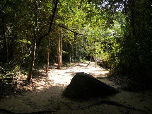 Gut 1500 m lang geht es den wunderschön bewaldeten Berg hinauf, Kbal Spean, Kambodscha (Foto Jörg Schwarz)