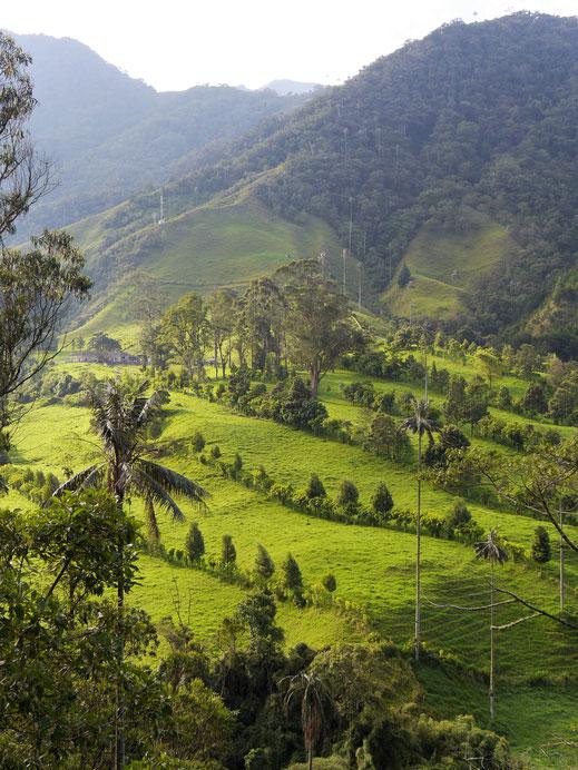 Morgendlicher Blick in das Cocora Valley, Salento, Kolumbien (Foto Jörg Schwarz)