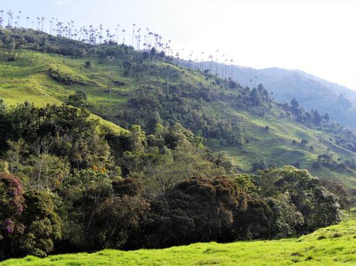 Unser Vorschlag Nr. 6: Trek im Valle de Cocora, Salento, Kolumbien (Foto Jörg Schwarz)