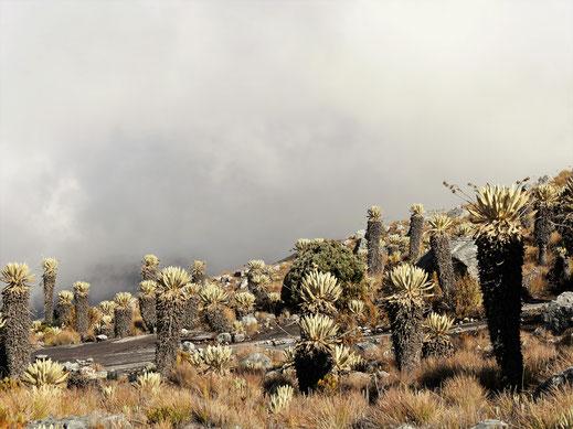 Der Sonne-Wolken-Mix erzeugt eigentümlich schöne Stimmungen, El Cocuy Nationalpark, Kolumbien (Foto Jörg Schwarz)